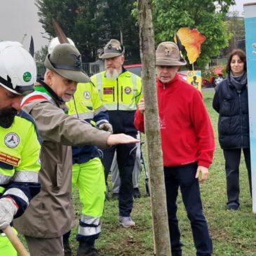 Gli Alpini di Varese piantano un albero per ricordare Don Vittorione